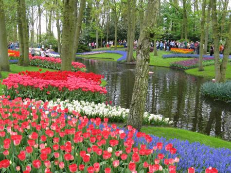 тюльпаны сада Кекенхоф